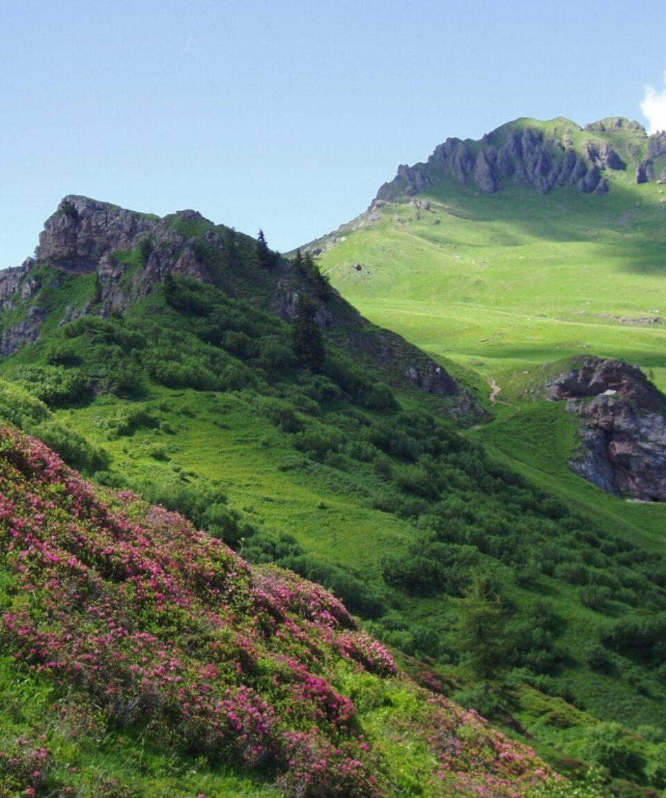 Crepe Rosse-Wild-Dolomiti