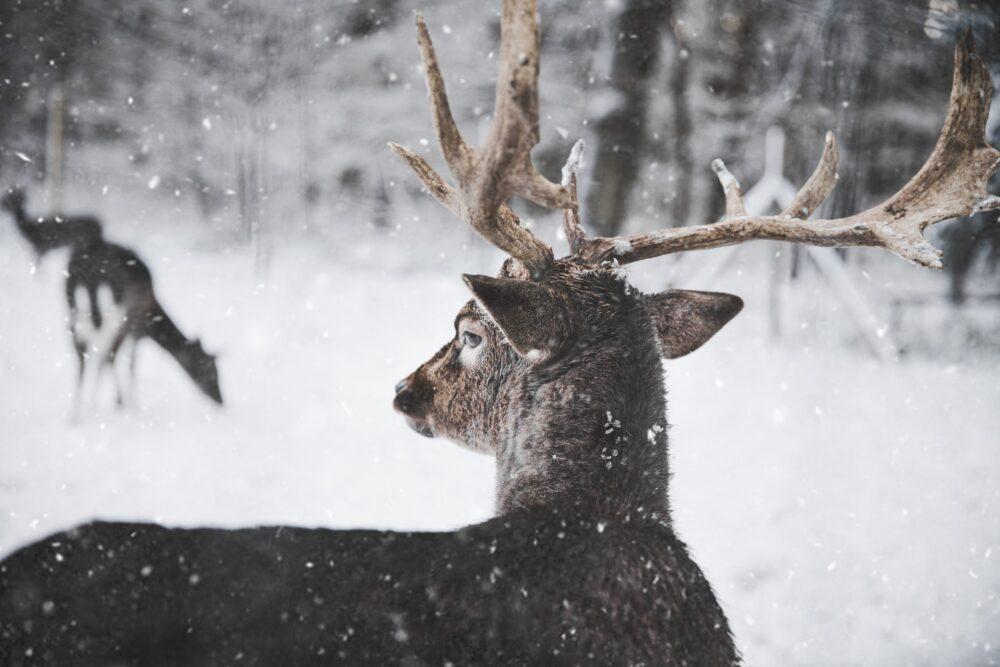 wild-outdoor