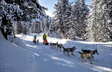 wild_dolomiti_sled_dog